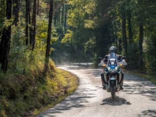 Si vas en moto y eres alérgico…mucha precaución